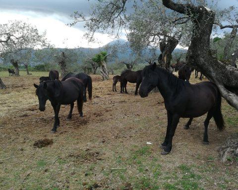 pony di esperia
