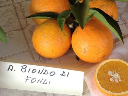 Arancio Biondo di Fondi