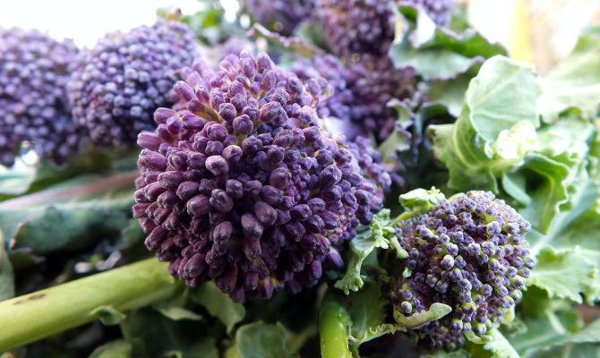 Chiacchietegli, broccoletti viola di Priverno