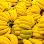 banane minacciate dal fungo killer