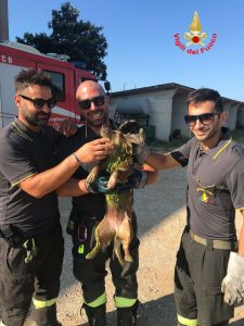 cane salvato 2