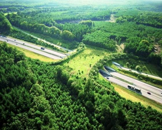 corridoio ecologico