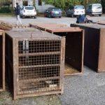 Le gabbie dove avrebbero viaggiato le dieci tigri trasportate da Latina fino in Daghestan (foto da pagina Facebook Earth)