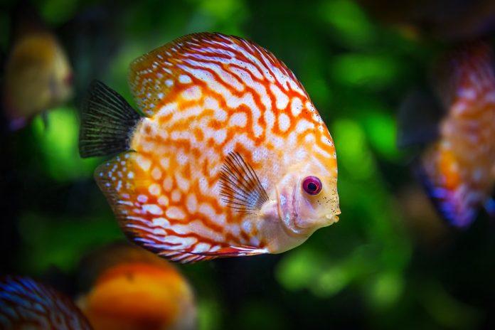 Pesci-per-acquario