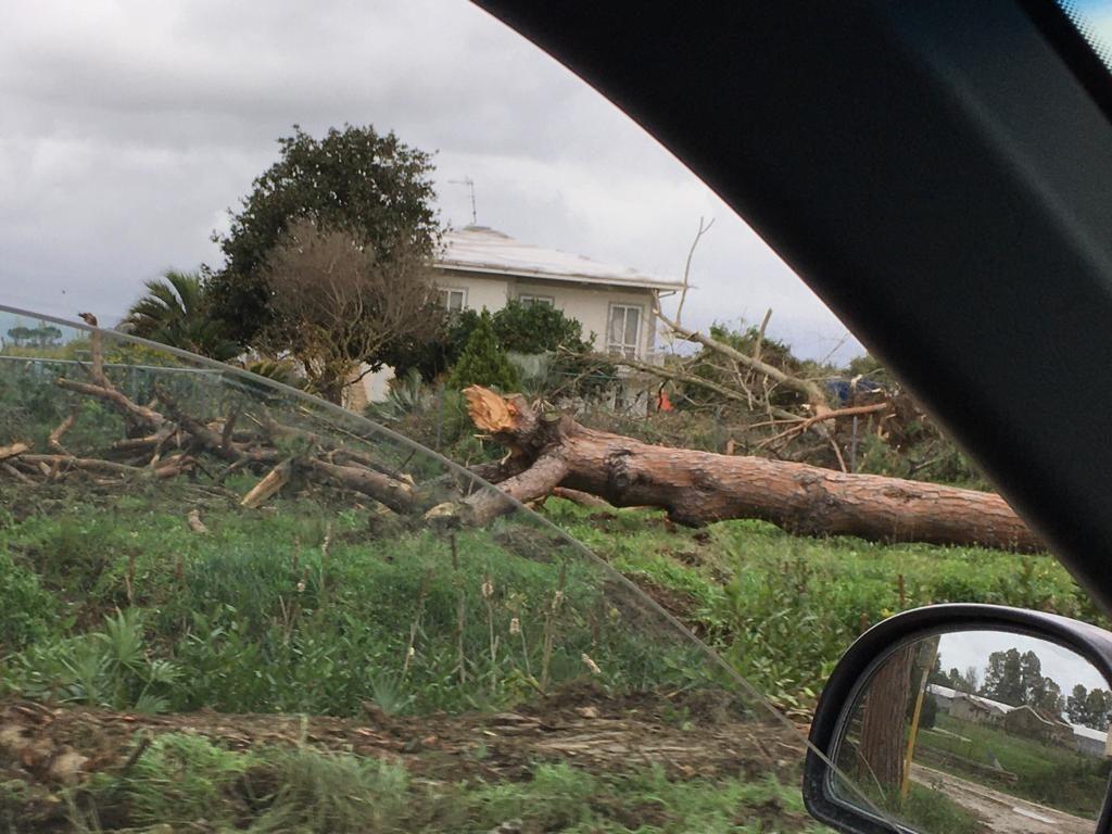 alberi caduti a latina