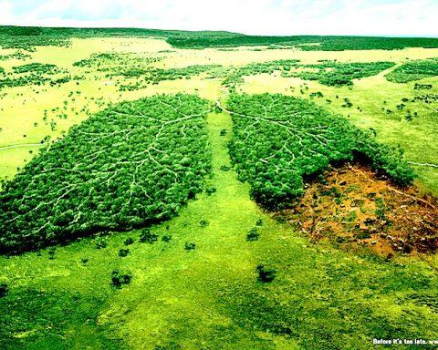albero polmoni