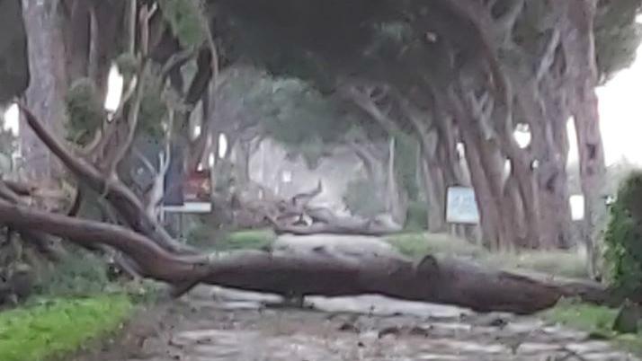 litoranea alberi caduti