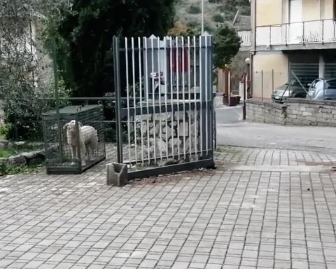 Itri - Un cane accalappiato in una gabbia