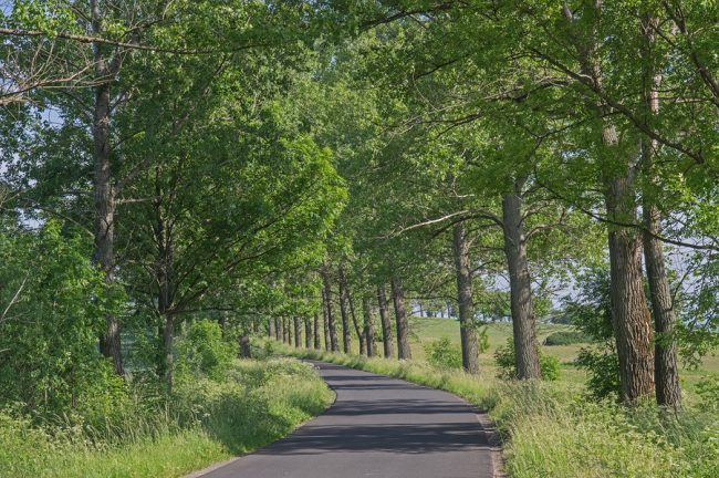 alberi frangivento