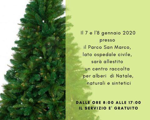 raccolta alberi di Natale