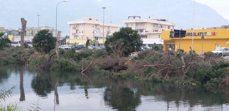 strage di alberi a Terracina