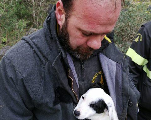 Salvataggio del cane