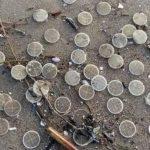 Dischetti inquinanti, il disastro risale al 2018