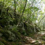 tagli_foreste