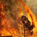Incendio_boschivo