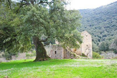 Dettaglio della sughereta San Vito a Monte San Biagio