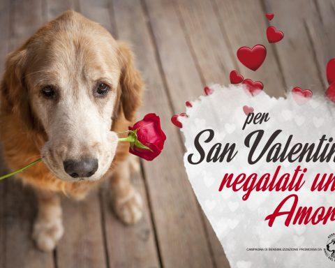 Amici del cane-San-Valentino