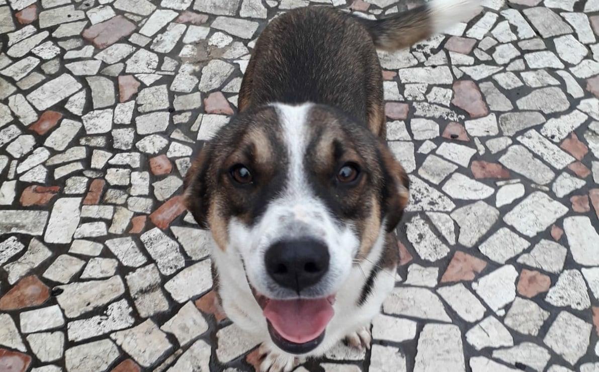 Il cane ucciso a fucilate a Priverno