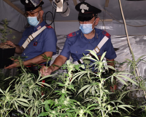La serra di marijuana sequestrata dai Carabinieri di Sezze