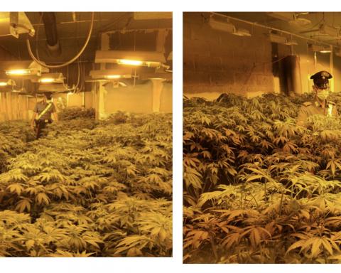 I Carabinieri del Norm di Aprilia all'interno della serra adibita alla coltivazione abusiva di marijuana